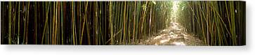 Bamboo Forest, Oheo Gulch, Seven Sacred Canvas Print by Panoramic Images