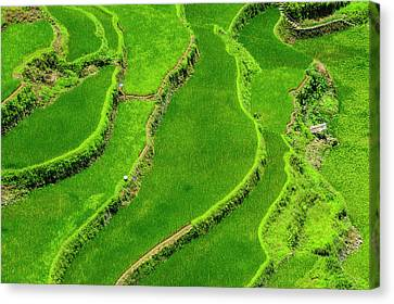 Michael Canvas Print - Bangaan In The Rice Terraces Of Banaue by Michael Runkel
