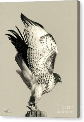 Canvas Print featuring the photograph Beautiful Predator by Suzette Kallen