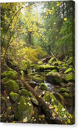 Beauty Creek Canvas Print by Idaho Scenic Images Linda Lantzy