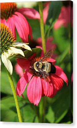 Bee Nice Canvas Print by Reid Callaway