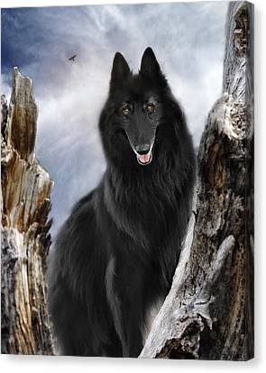 Belgian Shepherd Groenendael 2 Canvas Print by Wolf Shadow  Photography