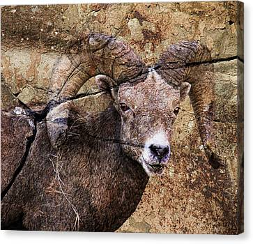 Bighorn Rock Canvas Print by Steve McKinzie