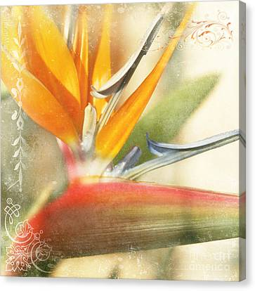 Bird Of Paradise - Strelitzea Reginae - Tropical Flowers Of Hawaii Canvas Print by Sharon Mau