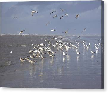 Birds At The Beach Canvas Print