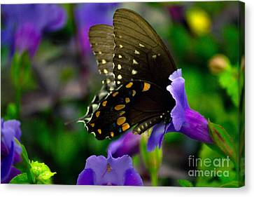 Black Swallowtail Canvas Print by Angela DeFrias