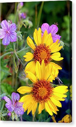 Macro Geranium Flower Canvas Print - Blanket Flower Aka Brown Eyed Susan by Chuck Haney
