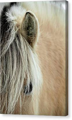 Blonde Canvas Print by Odd Jeppesen