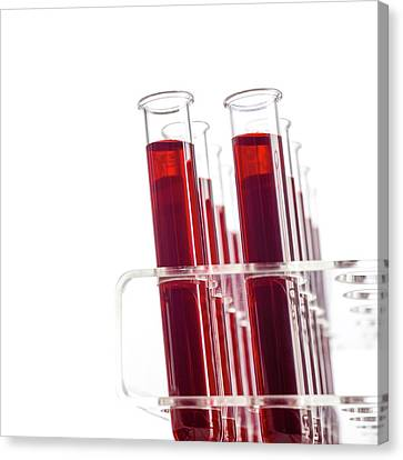 Blood Samples In Test Tubes Canvas Print