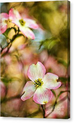 Blooms Of Spring Canvas Print by Darren Fisher