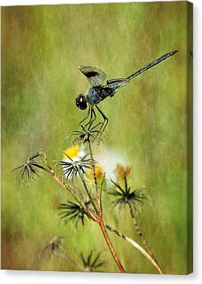 Canvas Print featuring the photograph Blue Dragonfly by Dawn Currie