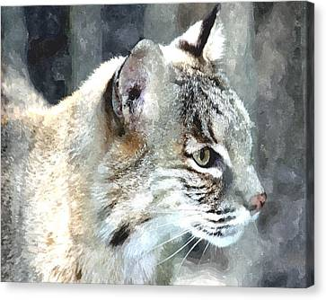 Bobcat Canvas Print by Barry Spears