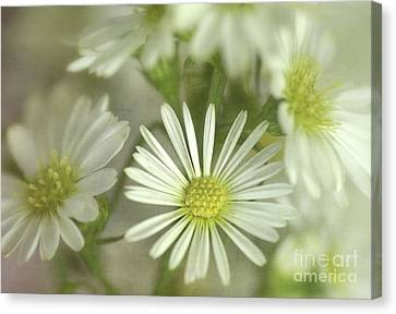 Bouquet Of White And Green Canvas Print by Julie Palencia