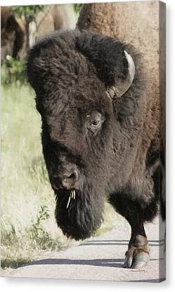 Buffalo Painterly Canvas Print by Ernie Echols
