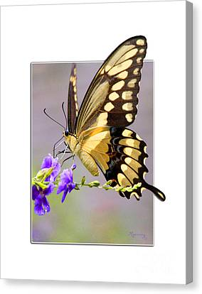 Canvas Print featuring the photograph Butterfly by Mariarosa Rockefeller