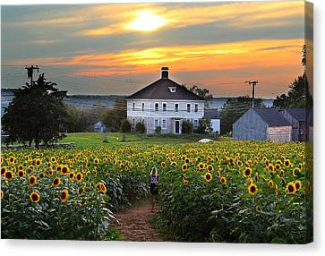 Buttonwood Farm Canvas Print