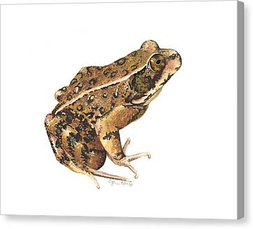 California Red-legged Frog Canvas Print