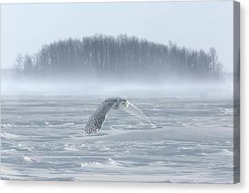 Canada, Ontario, Barrie Canvas Print