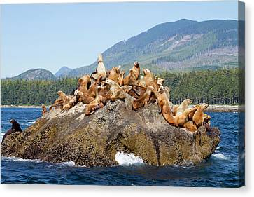 Canada, Pacific Rim National Park Canvas Print by Jamie and Judy Wild