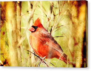 Canvas Print featuring the photograph Cardinal by Trina  Ansel
