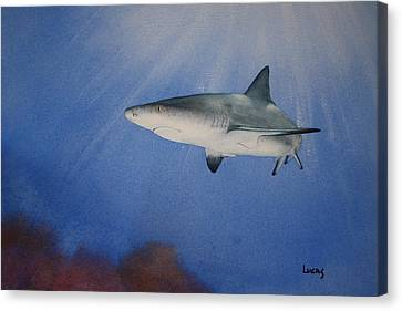 Caribbean Reef Shark 1 Canvas Print by Jeff Lucas