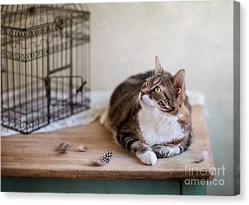 Cat And Bird Cage Canvas Print