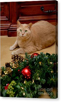 Decorated For Christmas Canvas Print - Cat And Christmas Wreath by Amy Cicconi