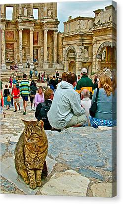 Library Of Celsus Canvas Print - Cat Near Library Of Celsus In Ephesus-turkey by Ruth Hager