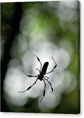 Web Gallery Canvas Print - Central America, Costa Rica by Jaynes Gallery