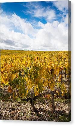 Chateau Lafite Rothschild Vineyards Canvas Print