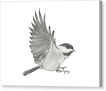 Chickadee Outstretched Canvas Print by Christopher Hughes