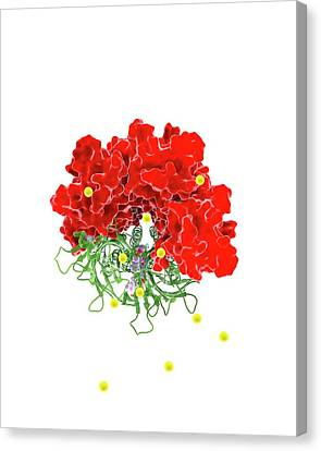 Chloride Channel And Ivermectin Complex Canvas Print