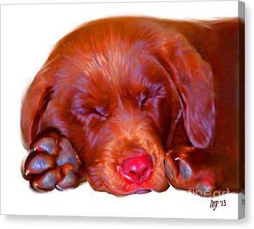 Chocolate Labrador Puppy Canvas Print by Iain McDonald
