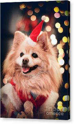 Christmas Dog Canvas Print by Charline Xia