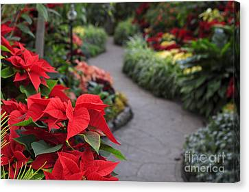 Christmas Garden Canvas Print by Charline Xia