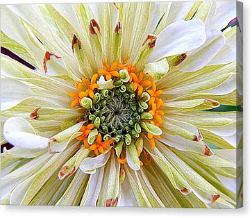 Chrysanthemum Fall In New Orleans Louisiana Canvas Print by Michael Hoard