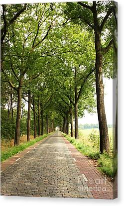 Cobblestone Country Road Canvas Print by Carol Groenen