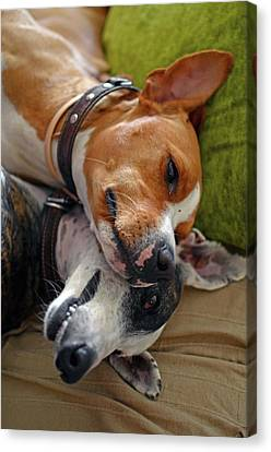 Sharing Canvas Print - Comical Portrait Of Two Dogs Sharing by Nano Calvo