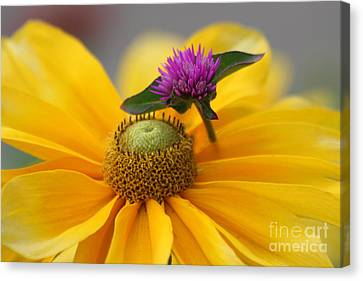 Contrast Canvas Print by Irina Hays