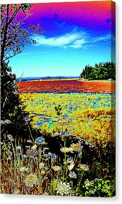 Coos Bay Wild Flowers Canvas Print by Joseph Coulombe