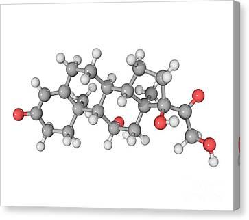 Cortisol Hormone Molecule Canvas Print