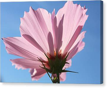 Canvas Print featuring the photograph Cosmos 3 by Gerry Bates