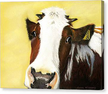 Cow No. 0650 Canvas Print by Carol McCarty