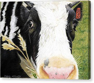 Cow No. 0652 Canvas Print by Carol McCarty