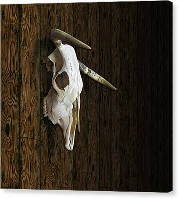 Cow Skull Canvas Print