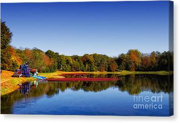 Canvas Print featuring the photograph Cranberry Farming by Gina Cormier