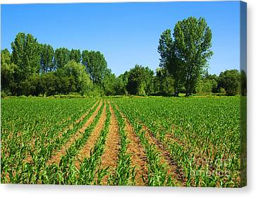 Cultivated Land Canvas Print