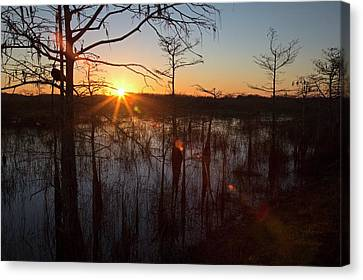 Cypress Swamp At Sunrise Canvas Print by Jim West