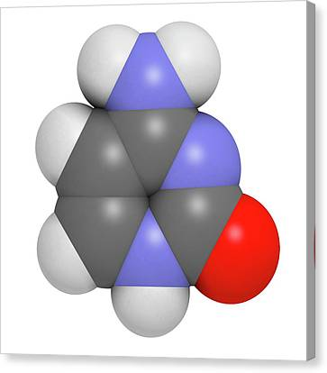 Cytosine Pyrimidine Nucleobase Component Canvas Print
