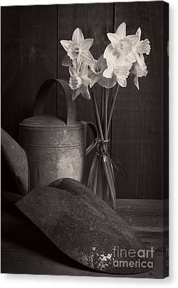 Daffodils Canvas Print by Edward Fielding